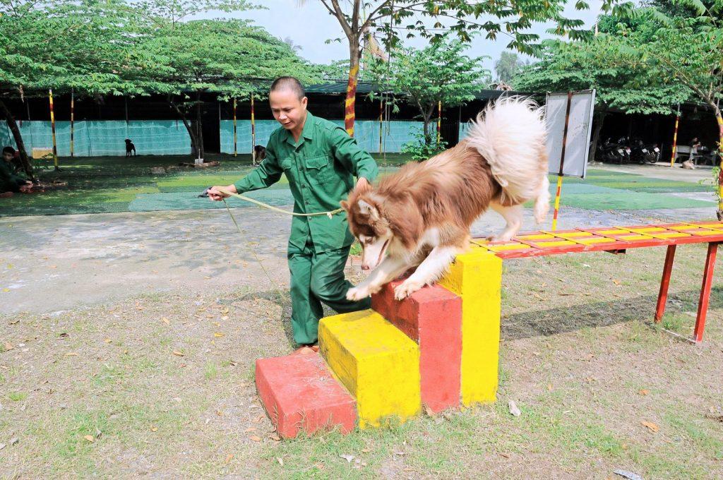 Trường huấn luyện chó cảnh chuyên nghiệp nhất